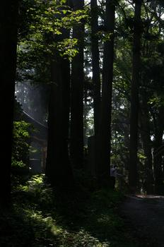 IMGP7450熊野の森.jpg