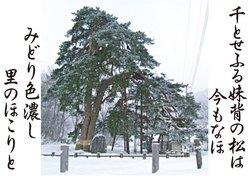 06-13ちとせふる.JPG